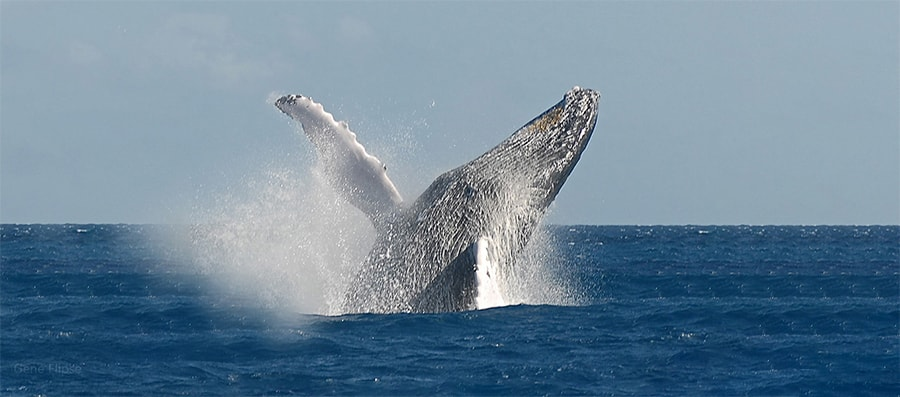 Mobydick Dominican Republic Whales