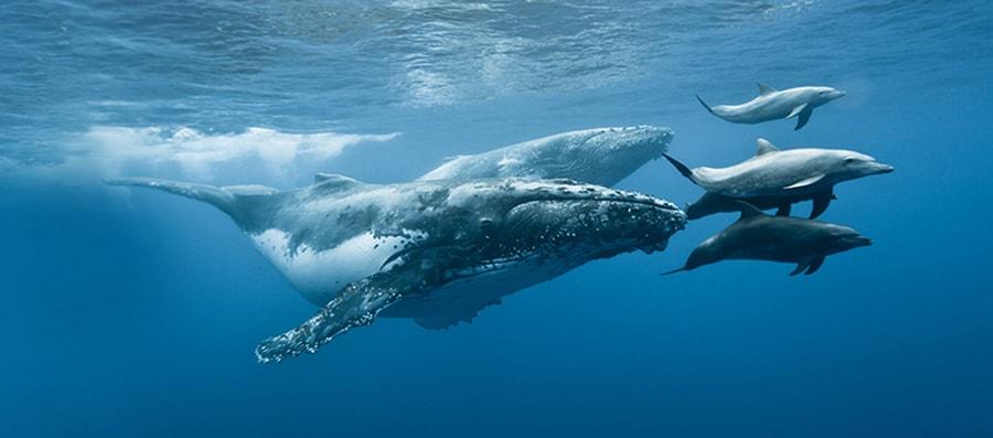 Mobydick La-reunion Whales