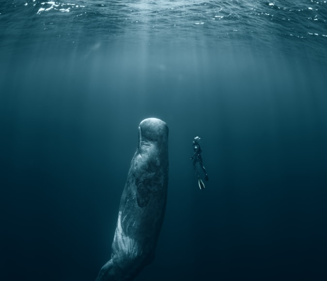 Mobydick Contact